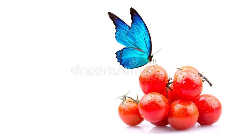 Tomates-cerises et papillon photos stock