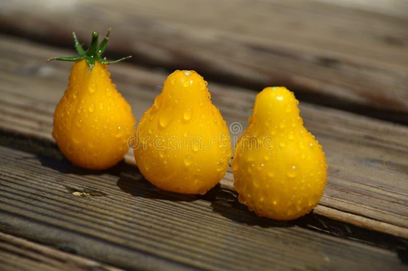 Tomates-cerises jaunes photos libres de droits