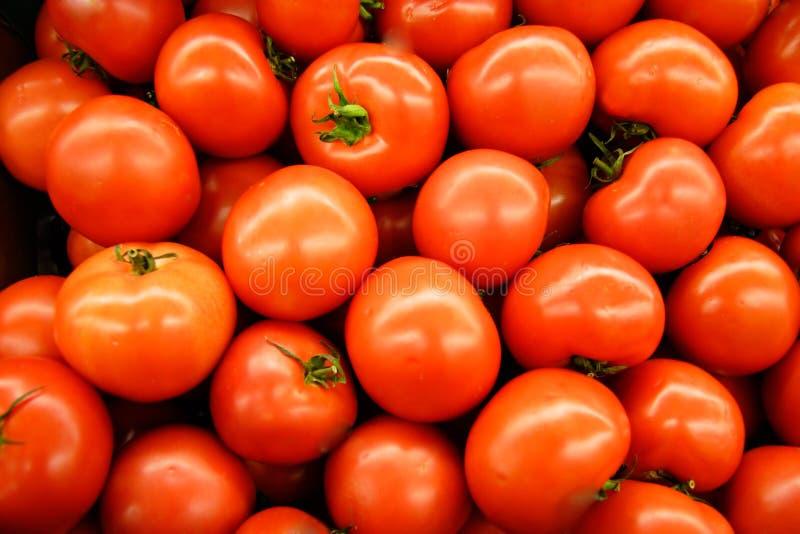 Tomates Chaudes De Chambre Photo libre de droits