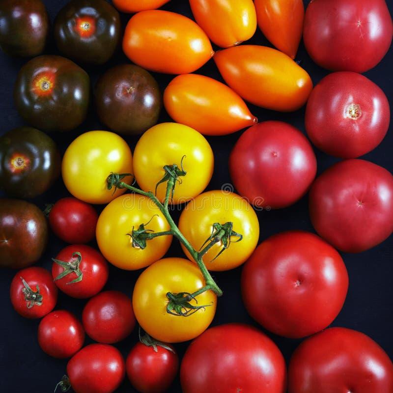 Tomates coloridos fotografia de stock royalty free