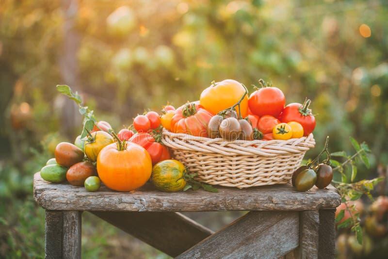 Tomates coloridos em pouca tabela de madeira do vintage fotografia de stock royalty free