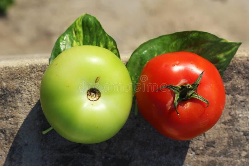 Tomates coloridos rojos y colores verdes imágenes de archivo libres de regalías