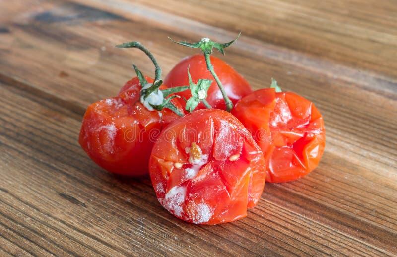 Tomates com molde fotografia de stock royalty free