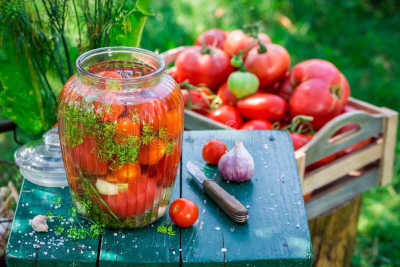 Tomates conservados en vinagre en el jardín fotos de archivo libres de regalías