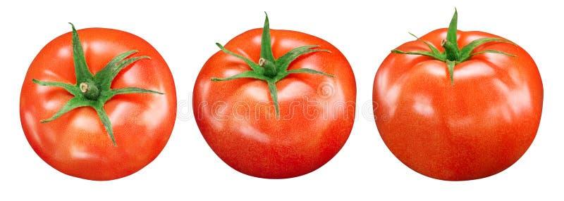 Tomates d'isolement sur le blanc illustration libre de droits