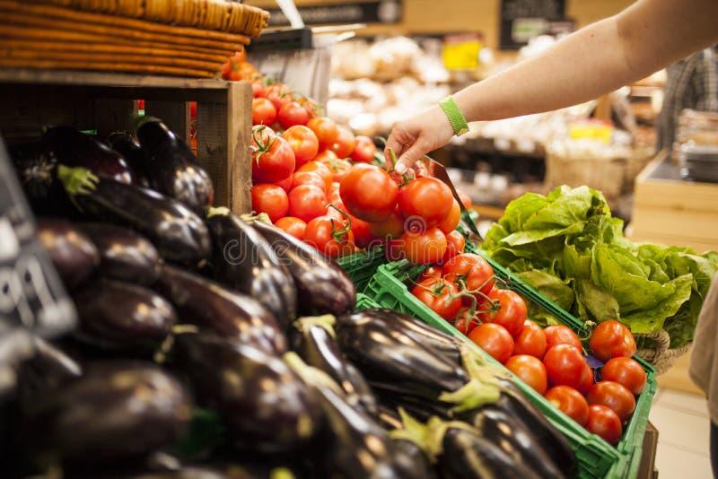 Tomates da colheita da mão do ` s da mulher imagens de stock