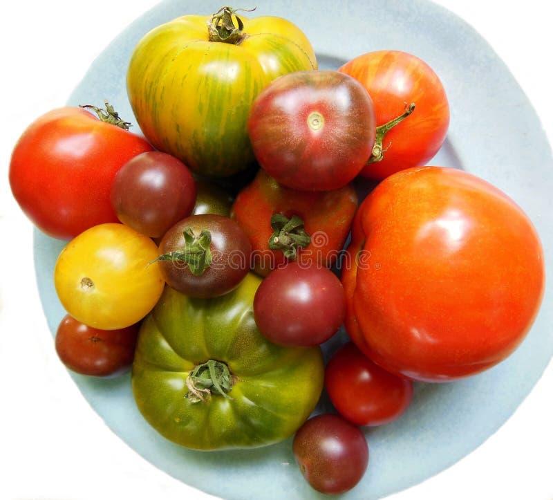 Tomates da herança na placa azul fotografia de stock royalty free