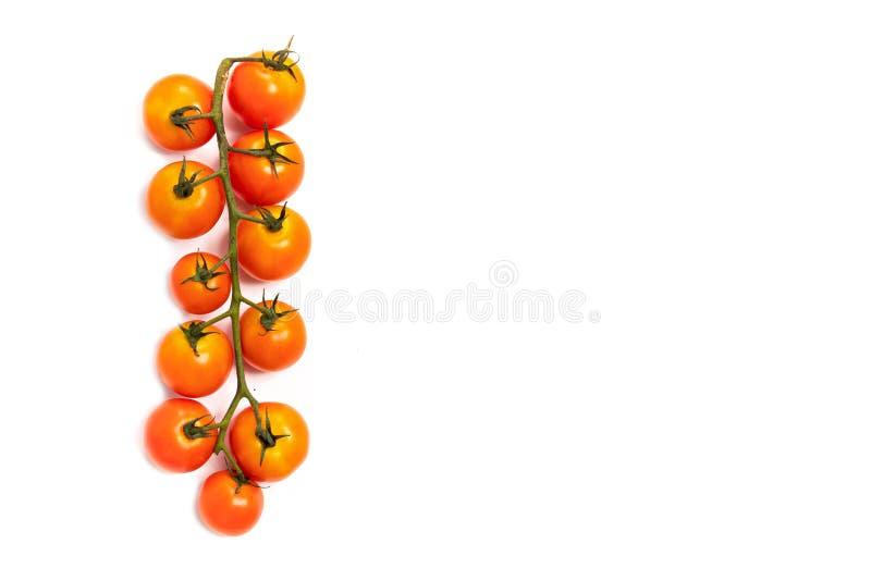 Tomates de cereja da videira foto de stock
