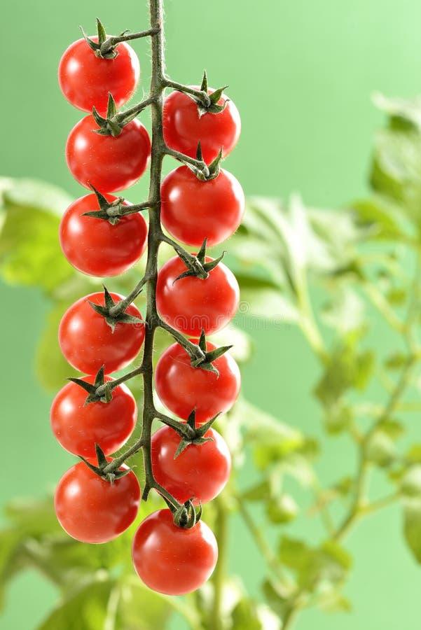 Tomates de cereja pequenos imagem de stock royalty free