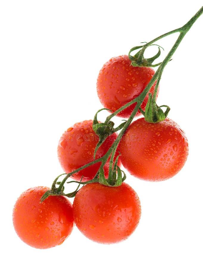 tomates de cereza con descensos del agua en una rama imagen de archivo libre de regalías
