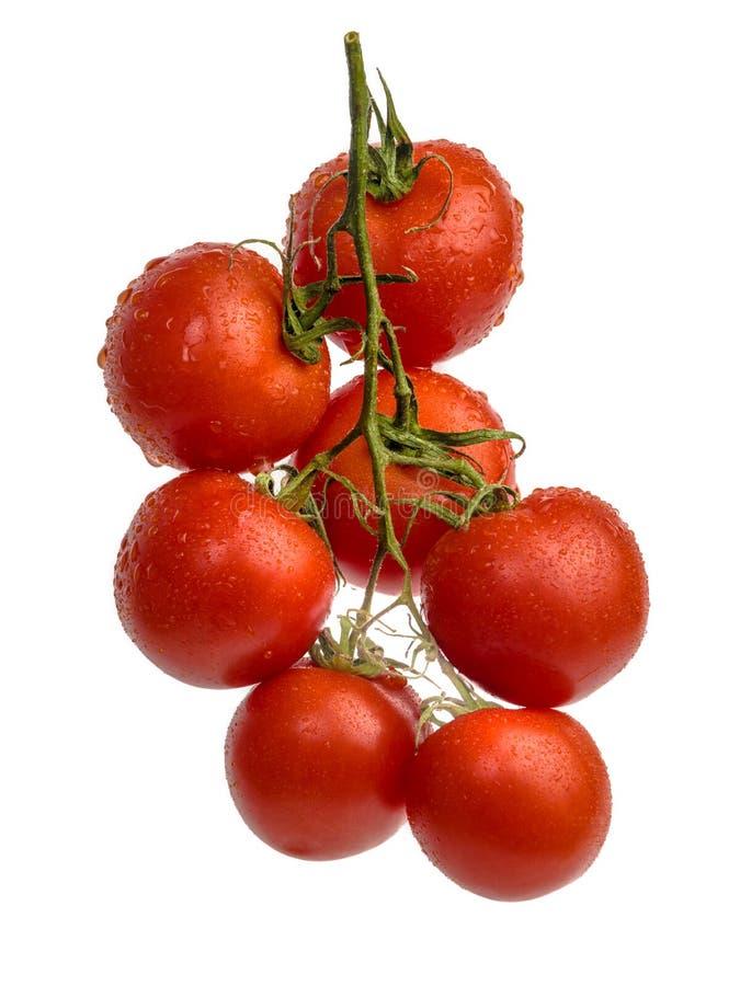 Tomates de cereza con descensos en rama imágenes de archivo libres de regalías