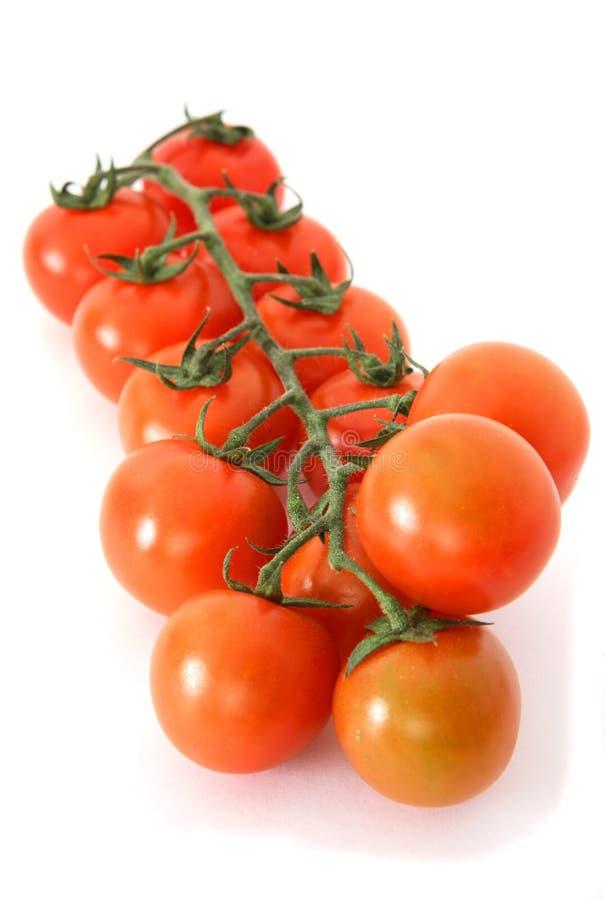 Tomates de cereza en la vid foto de archivo libre de regalías