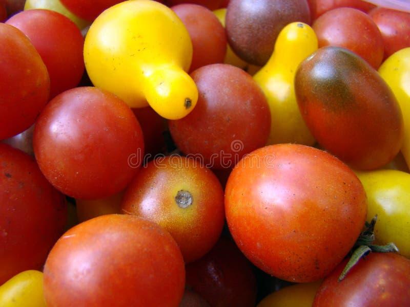 Tomates de cereza multicolores fotos de archivo libres de regalías