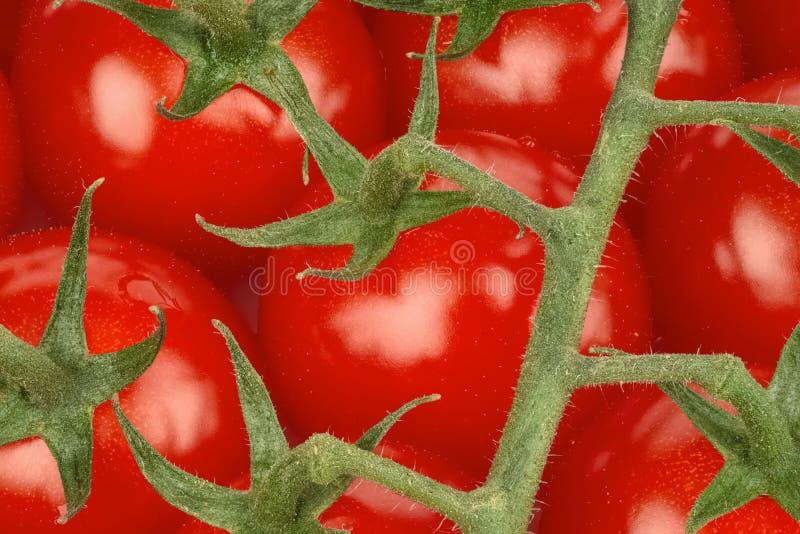 Tomates de cereza orgánicos jugosos imagen de archivo libre de regalías