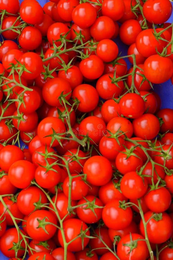 Tomates de cereza rojos frescos foto de archivo libre de regalías