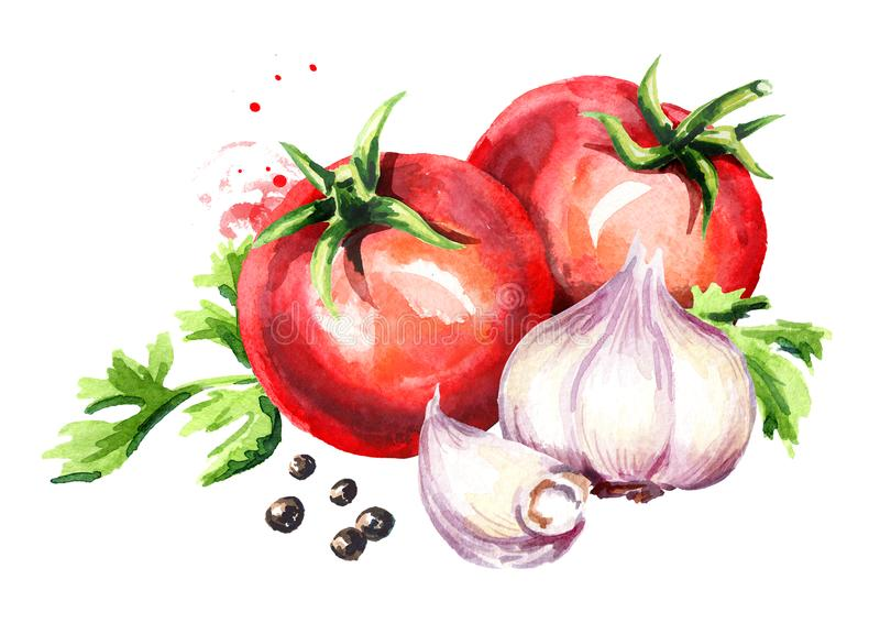 Tomates de déchirure avec le jeunes ail et grains de poivre Illustration tirée par la main d'aquarelle d'isolement sur le fond bl illustration libre de droits