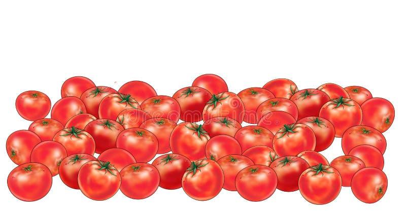 Tomates de groupe illustration stock