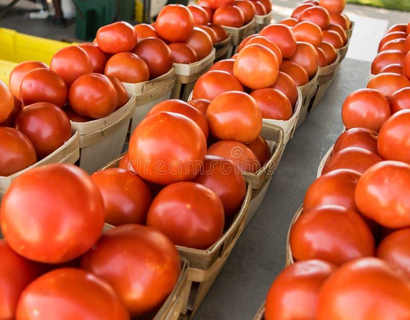 Tomates de la producción del mercado del ` s de Texas Farmer foto de archivo libre de regalías