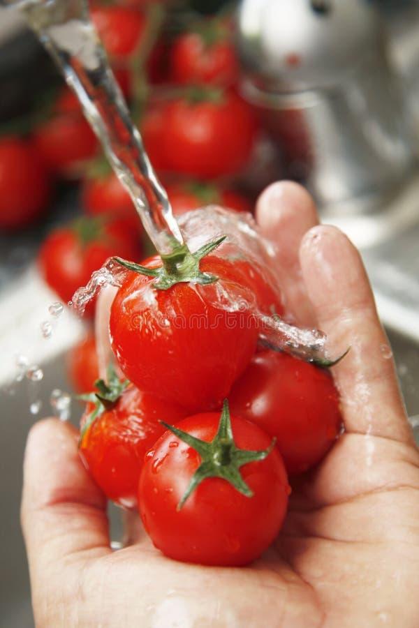 Tomates de lavage image stock
