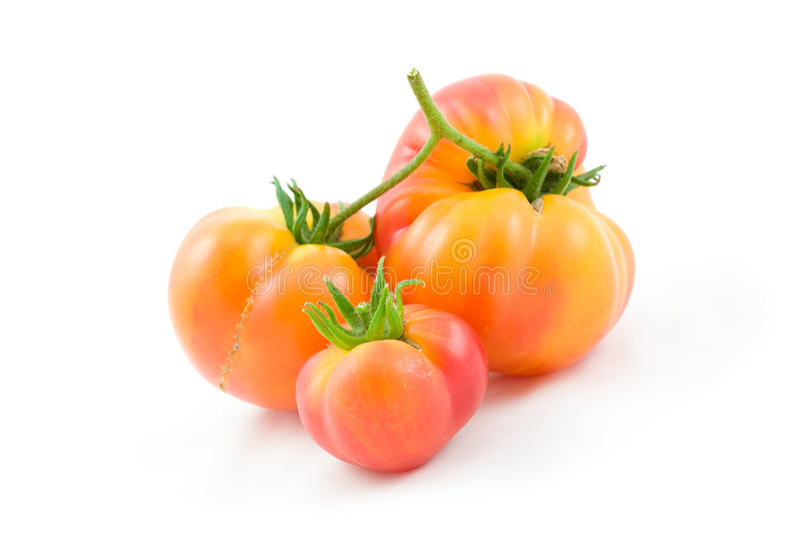 Tomates de montagnard   photographie stock libre de droits