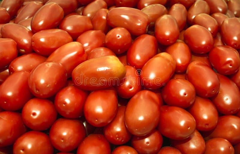 Tomates de Roma photos stock