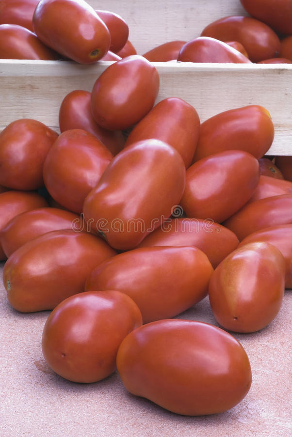 Tomates de San Marzano photos stock