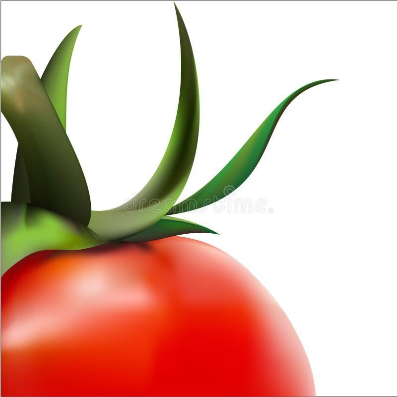 Tomates de vecteur illustration de vecteur
