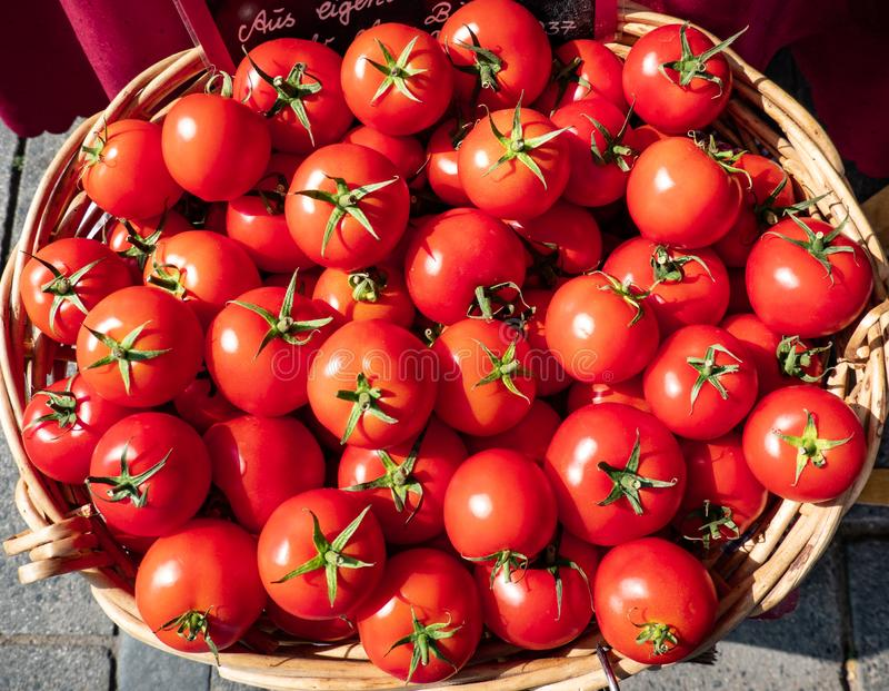 Tomates deliciosos maduros rojos en una opinión de la cesta del top en la luz del sol foto de archivo libre de regalías