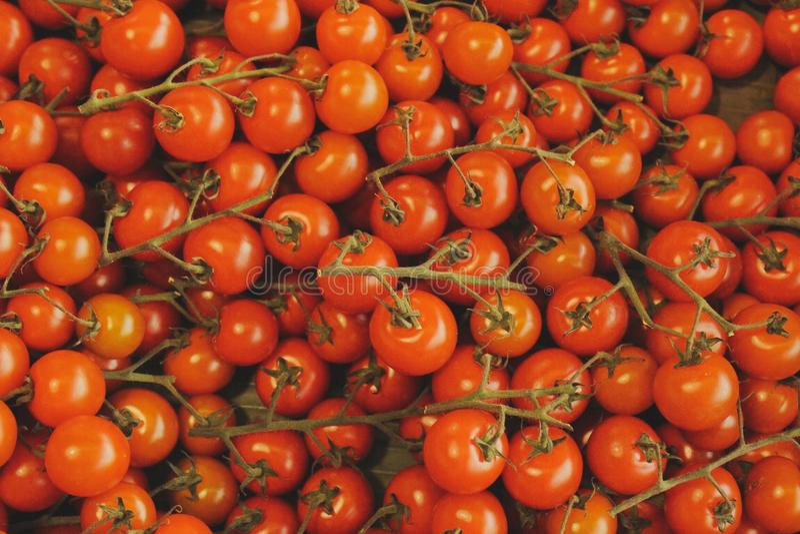 Tomates do bebê imagem de stock