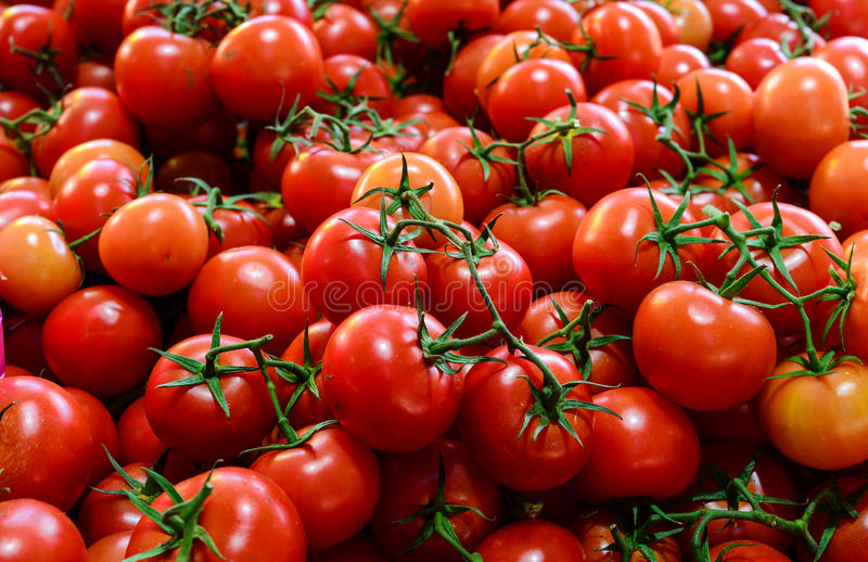 Tomates do fardo para a venda fotografia de stock royalty free