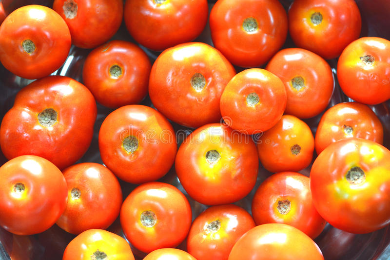 Tomates do vermelho de Riped fotografia de stock royalty free