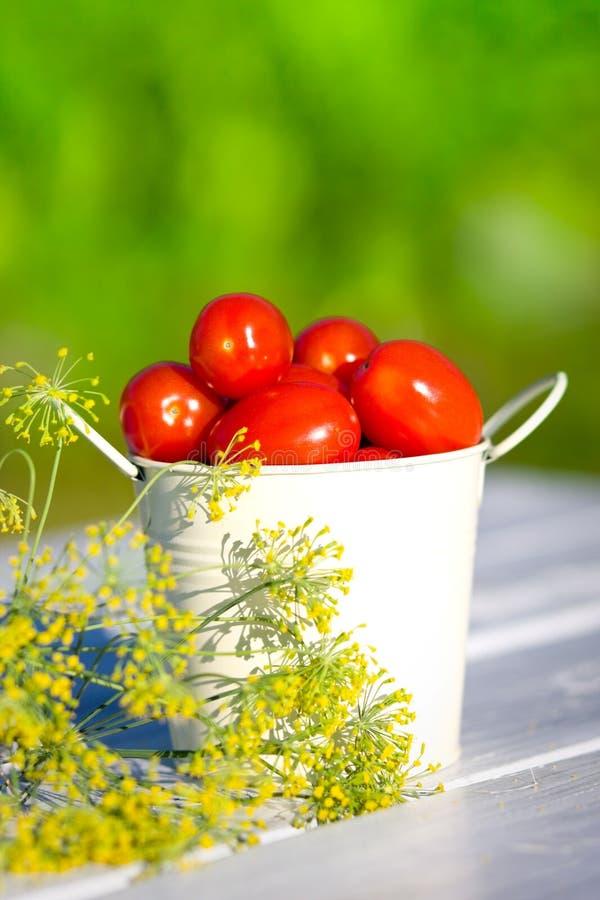 Tomates e aneto imagens de stock royalty free