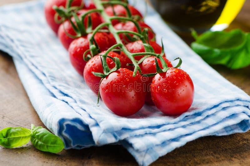Tomates e bazalik frescos foto de stock royalty free