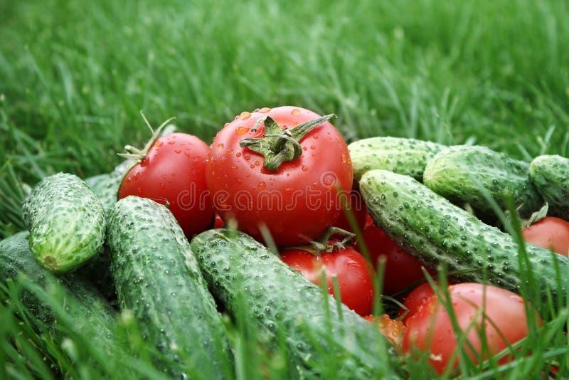 Tomates e pepino na grama imagem de stock