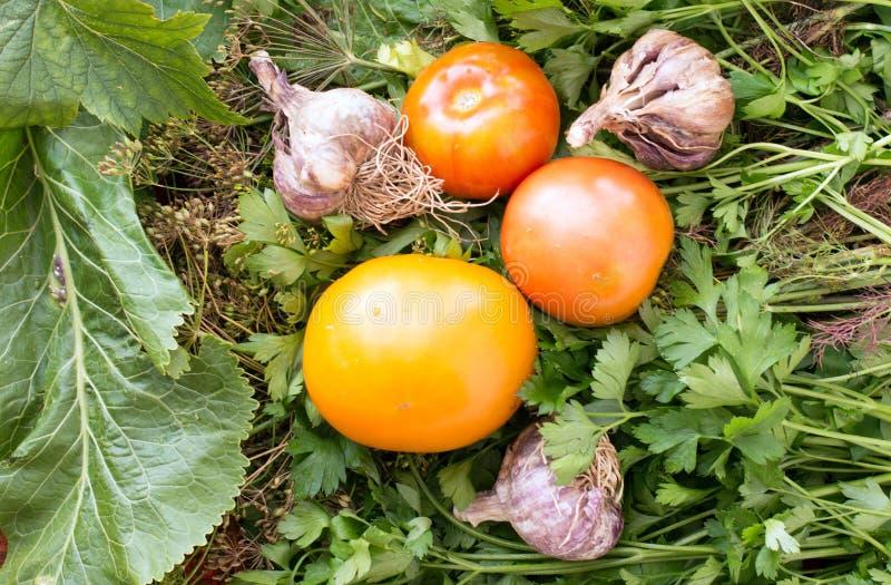 Tomates et ail frais dans un jardin image libre de droits
