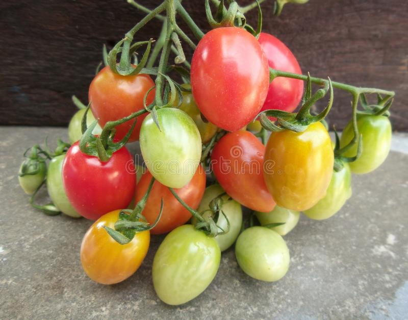 Tomates fraîches photographie stock libre de droits