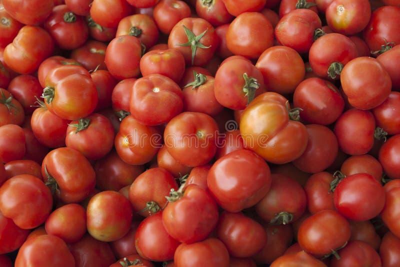 Tomates fraîches Tomates rouges Tomates organiques du marché de village Fond qualitatif des tomates image libre de droits