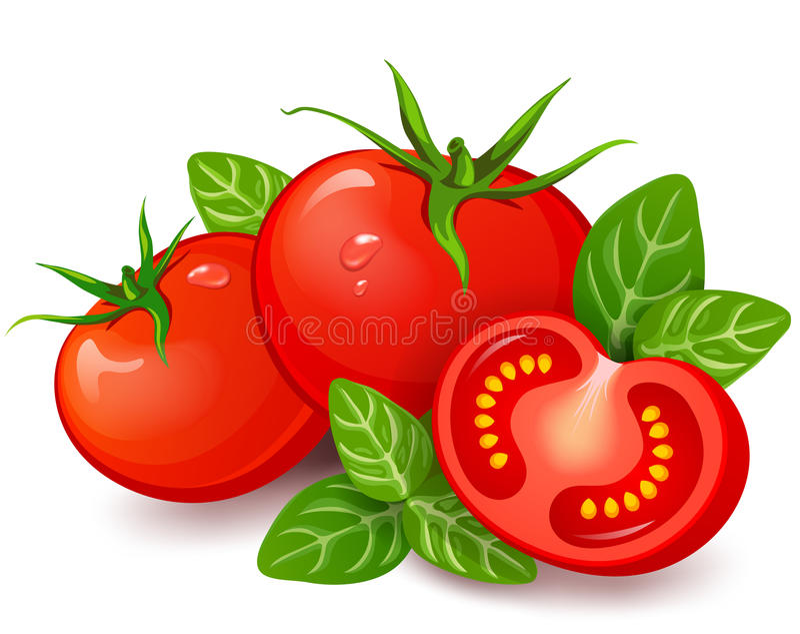 Tomates frescos con albahaca en el fondo blanco stock de ilustración