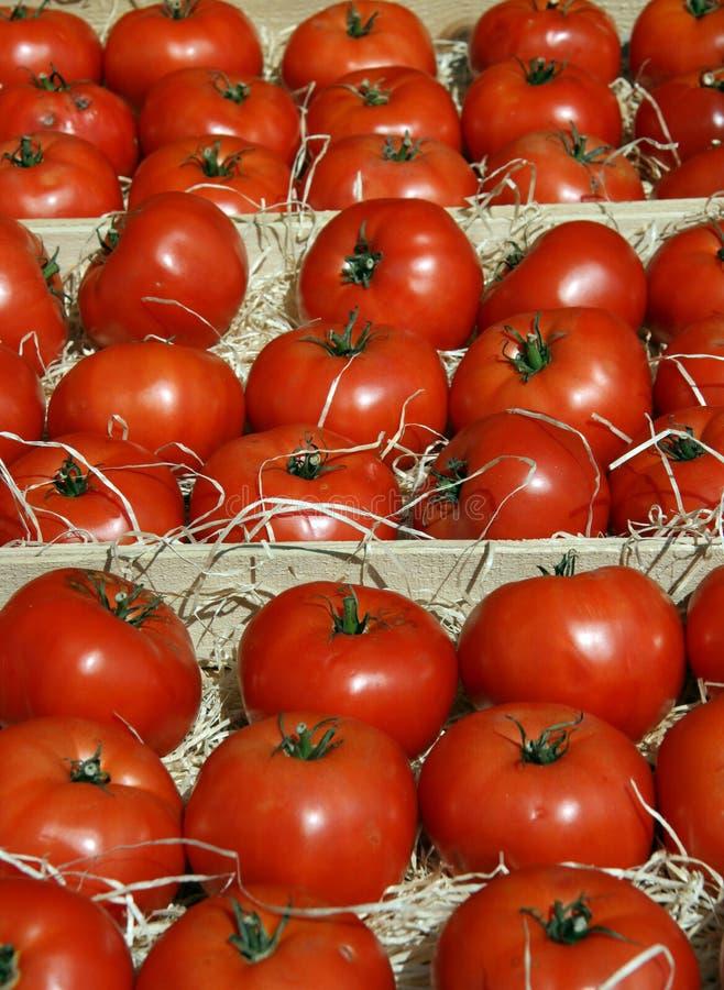 Tomates frescos em um carrinho do mercado da exploração agrícola fotos de stock royalty free