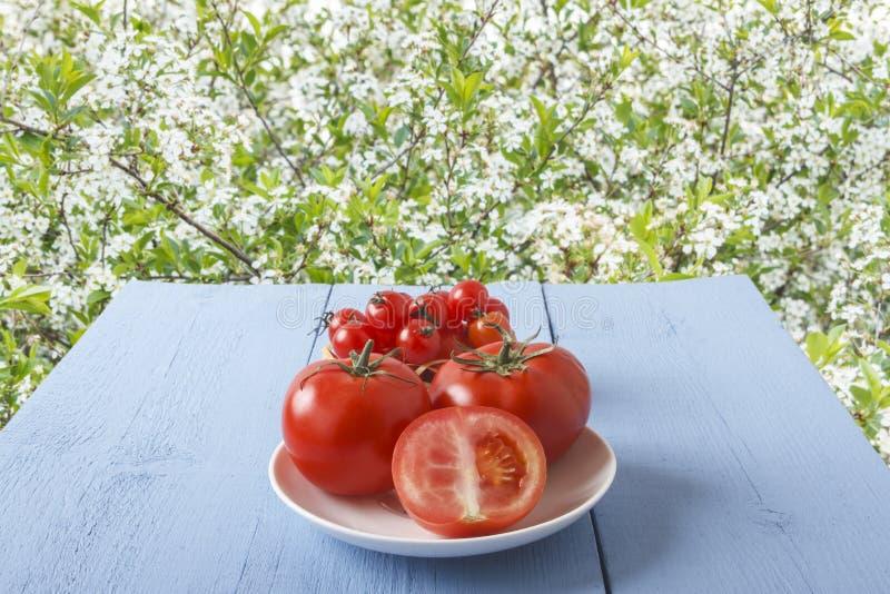 Tomates frescos en la tabla de madera en jardín en el fondo de los manzanos en primavera Vista lateral Copie el espacio Forma de  fotografía de archivo libre de regalías