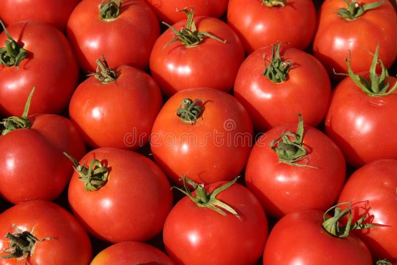 Tomates frescos no mercado dos fazendeiros fotografia de stock royalty free