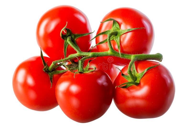Tomates frescos suculentos em um ramo verde fotografia de stock