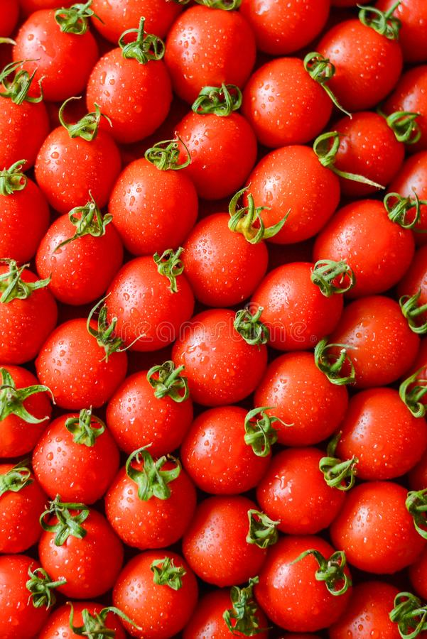 Tomates juteuses m?res images stock