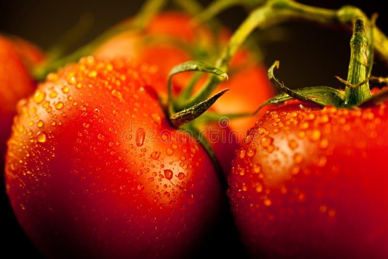 Tomates limpados frescos na videira fotos de stock royalty free
