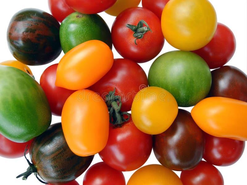 Tomates mélangées colorées sur le fond blanc image stock