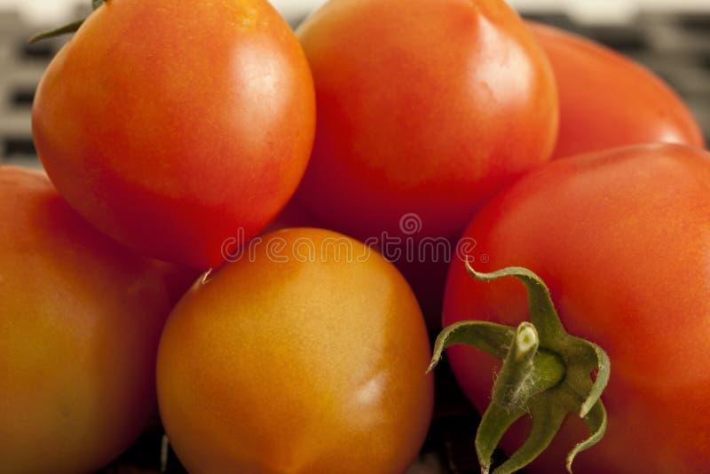 Tomates mûres photo libre de droits