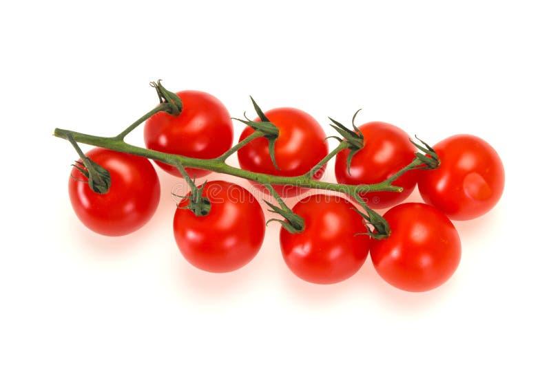 Tomates m?res sur la branche images stock
