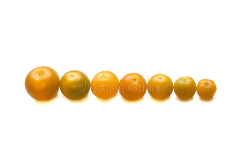Tomates maduros amarillos fotos de archivo