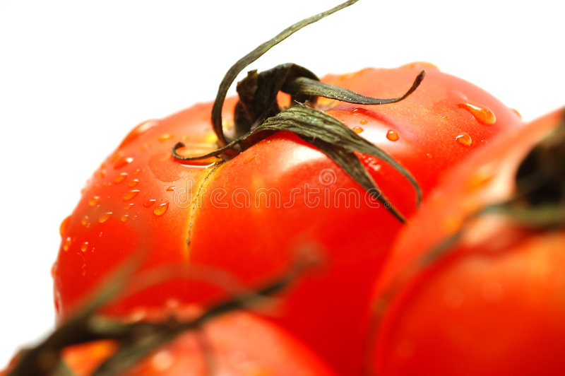 Tomates maduros frescos