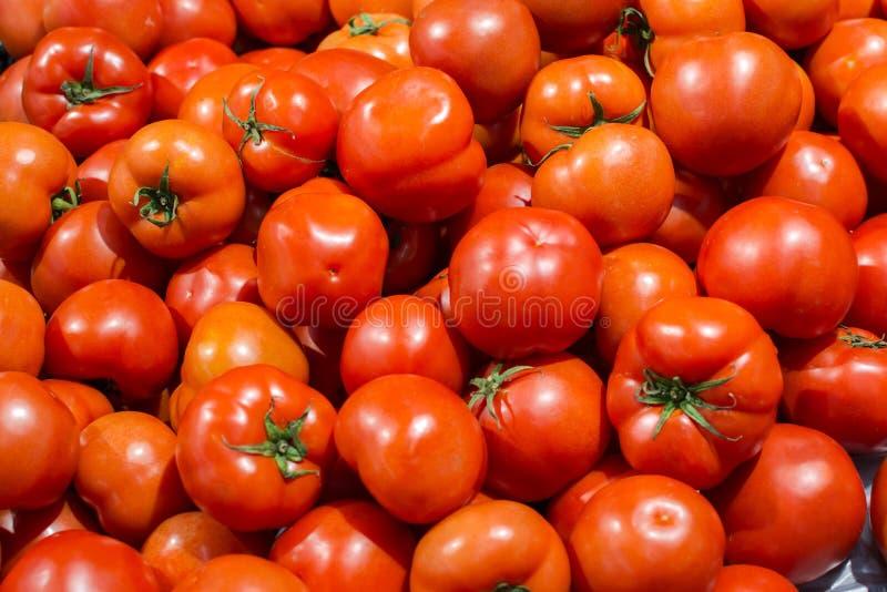 Tomates maduros frescos foto de archivo libre de regalías